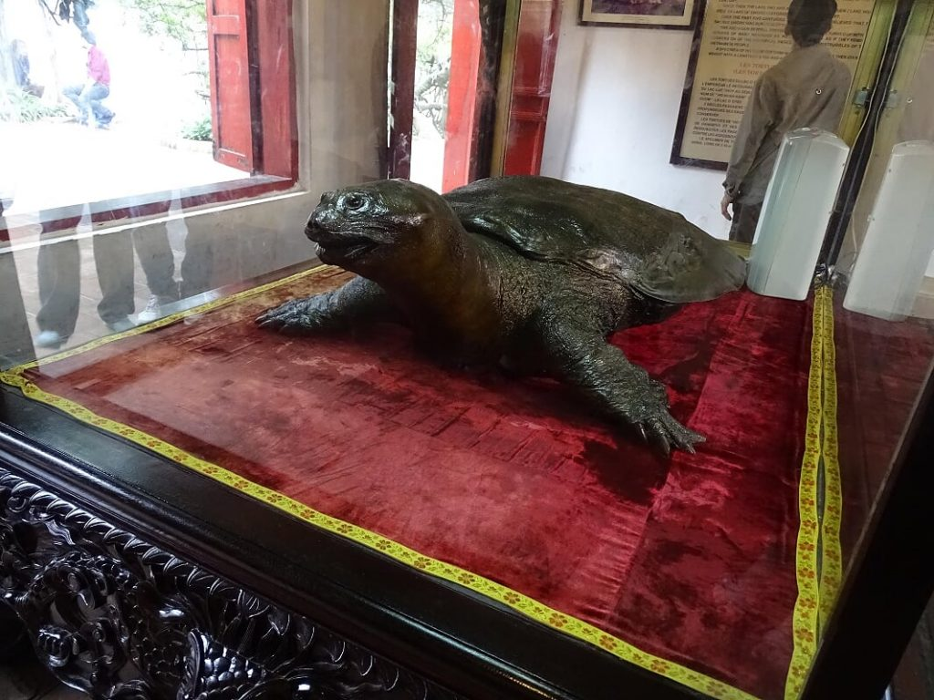 Schildkröte im Jadebergtempel im Hoan -Kiem-See Hanoi
