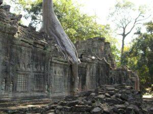 Von Natur und Dschungel vereinnahmte Ruinen des Tempel Ta Prohm in Angkor  (Copyright@ Tourism Cambodia)