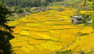 Landschaft in Bhutan
